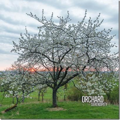 orchard_1000px_rvb
